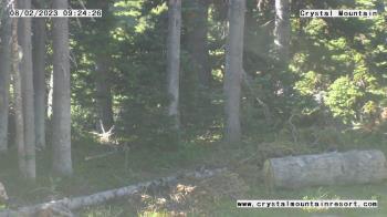 Live Camera from Crystal Mountain Inc, Enumclaw, WA 98022