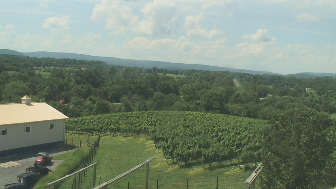Live Camera from Barrel Oak Winery, Delaplane, VA 20144