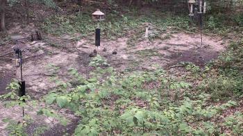 Live Camera from Cincinnati Nature Center, Milford, OH 45150