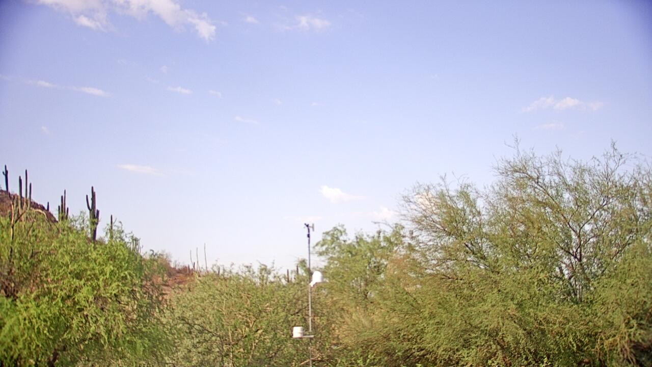 Live Camera from Desert Botanical Garden, Phoenix, AZ 85008