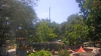 Live Camera from The Texas Zoo, Victoria, TX